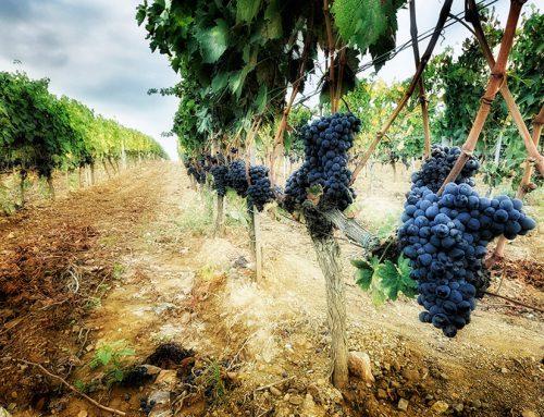 Degustazione vini del Chianti con autista privato